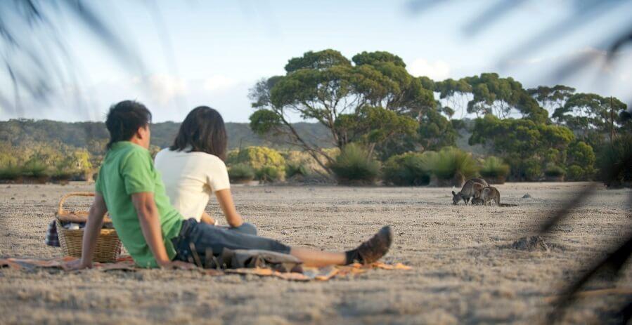 Kangaroo Island Tours V