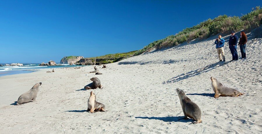 Kangaroo Island Tours VI