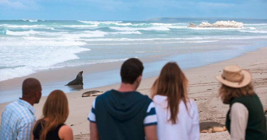 1 Day Kangaroo Island Tour - Seal Bay