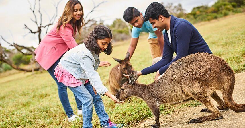 1 Day Kangaroo Island Tour - feeding kangaroos
