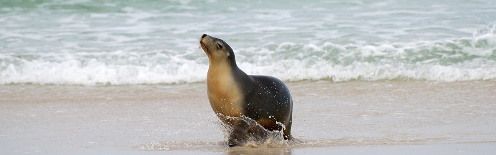 The Marine Wildlife of Kangaroo Island