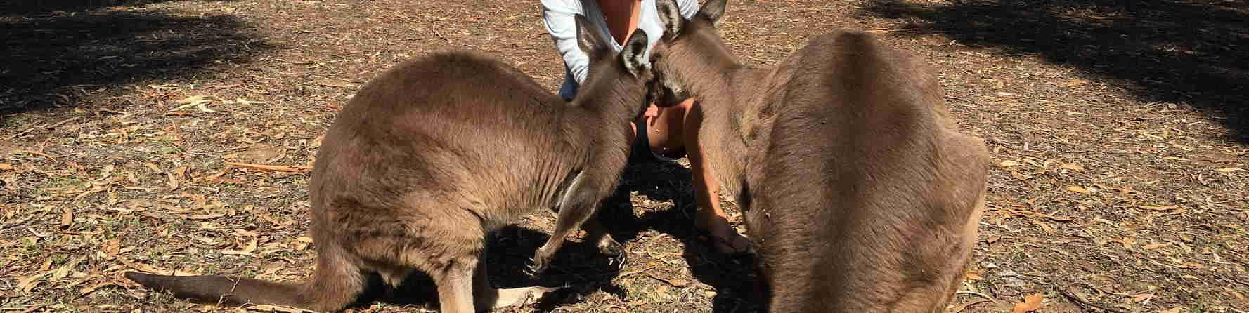 What Animals are on Kangaroo Island?