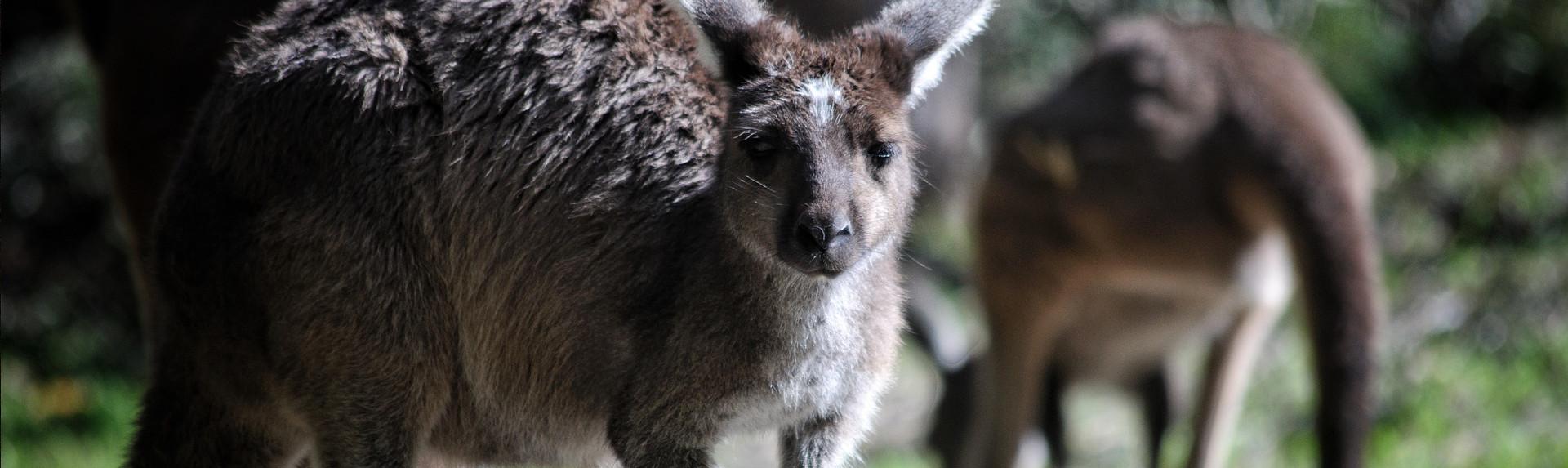 Is it safe to visit Kangaroo Island?