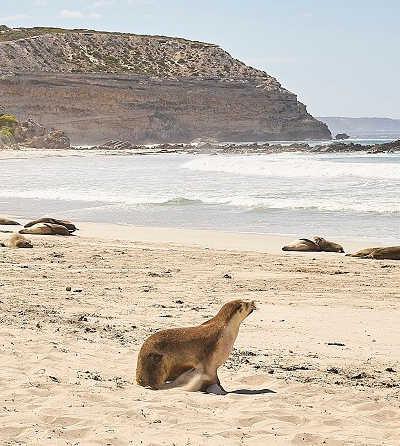 1 Day Kangaroo Island Tour $310